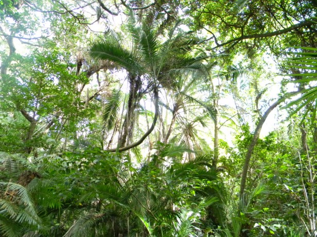 Sunlight shining through the treetops