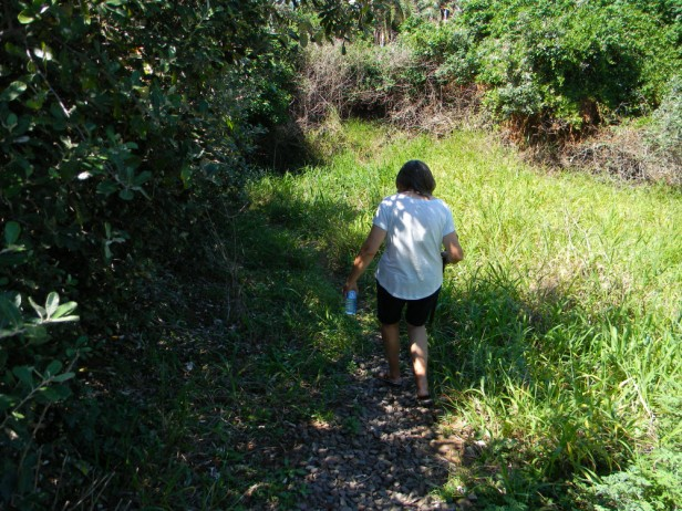 Following the footpath through the woods to the beach