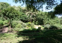TC Roberson Nature Reserve Butterfly Garden