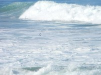 Elysium Beach 1