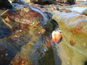 In the rockpool