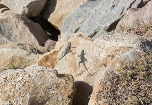 Dancing with lizards