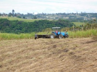 Workers in the sugar cane fields