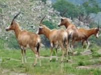 Blesbokke in Lake Eland Nature Reserve