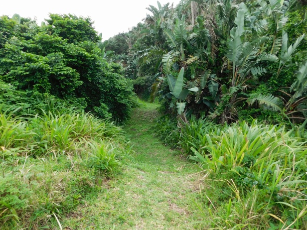 Bush path through the dense growth next to the railway line