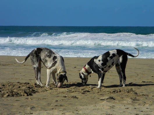 Watching dogs at play on the beach
