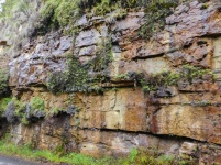 Water dripping from the sandstone in the cutting - Oribi Gorge