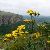 Wildflowers on the plateau edge of the Oribi Gorge - Lake Eland Nature Reserve