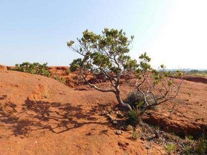 Little Red Desert 8