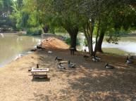 Treehaven Waterfowl Trust Bird Park, Vereeniging, Gauteng