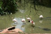 Treehaven Waterfowl Bird Park 2