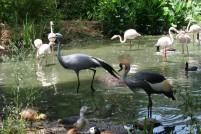 Treehaven Waterfowl Bird Park 4