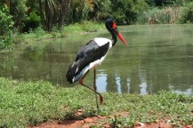 Treehaven Waterfowl Bird Park 6